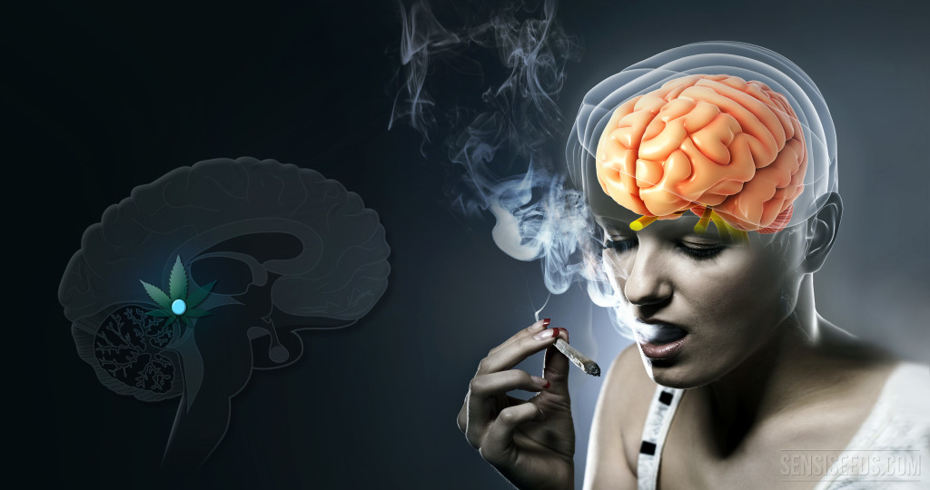 What-happens-in-the-pineal-gland-when-we-use-cannabis-Sensi-Seeds-blog-1-1024x540