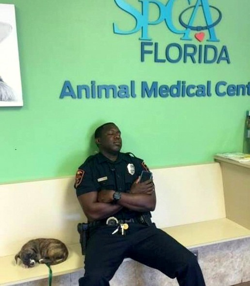 5.24.16-Officer-Refuses-to-Leave-Stray-Puppy's-Side-Until-He-Knows-She's-Safe1-515x590