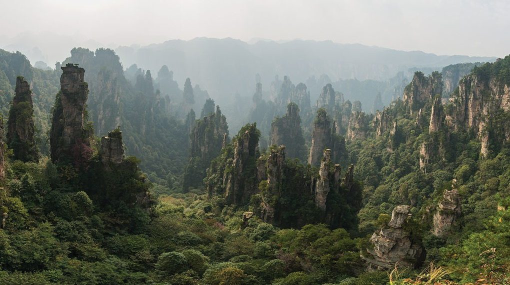 china-forest-replanting-1-1020x570
