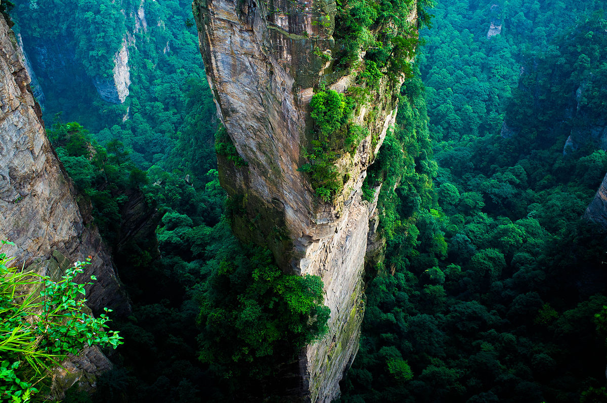 china-forest-replanting-2